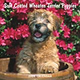 Wheaten Terrier, Soft Coated Puppies 2009 7X7 Mini Wall Calendar