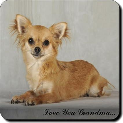 "Marrón de perro Chihuahua "" Love You Grandma... "" abuelos Day"