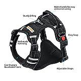 No Pull Dog Harness, Babyltrl Front Range Dog Vest Harness Adjustable Easy Walk Pet Harness for Dogs Large - Black
