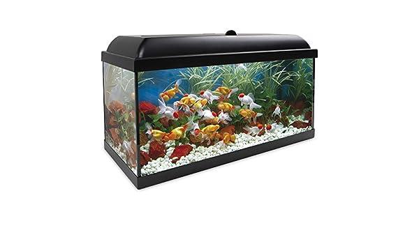 ICA KDI100 Kit Aqua-Led Pro 100 con Filtro Interior: Amazon.es: Productos para mascotas