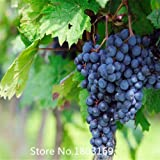 buy 2015 30 seeds / pack, Cabernet Sauvignon Grape Seeds Hardy Seedling fruit seeds Mix Colors now, new 2018-2017 bestseller, review and Photo, best price $4.98