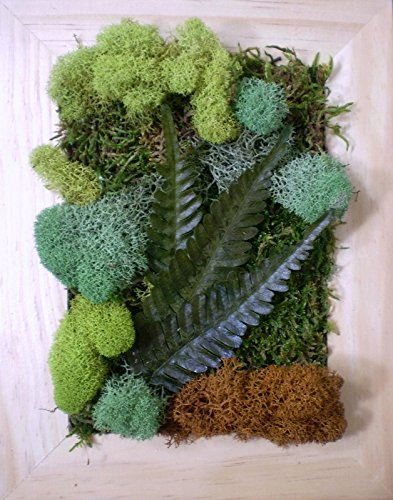 preserved-moss-and-fern-wall-hanging-art-decor