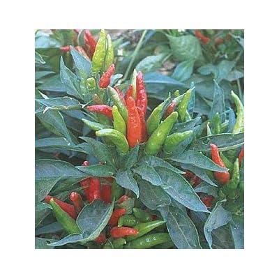 Pepper Hot Thai Great Heirloom Vegetable by Seed Kingdom 15 Seeds : Vegetable Plants : Garden & Outdoor