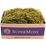 SuperMoss (27011) Spanish Moss Preserved, Basil, 3lbs