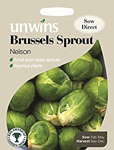 Unwins Pictorial paquete – Bruselas Sprout Nelson F1 – 40 Semillas