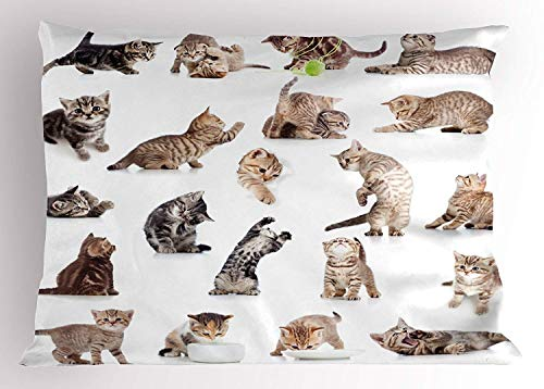 (MTDKX Cat Pillow Sham, Collection of Funny Playful Baby Kitten Pet Scottish Tabby Striped Pussu Animal Design, Decorative Standard Queen Size Printed Pillowcase, 30 X 20 inches, Grey White )