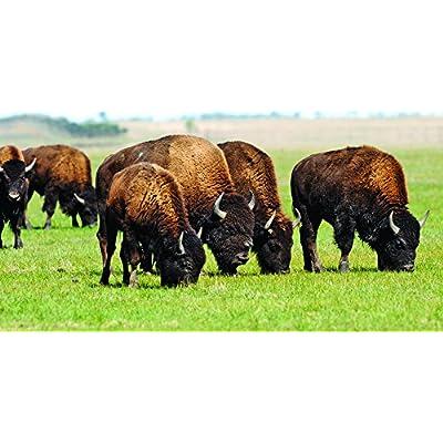 Nature's Seed 0.5 Acre Mid-West/Mid-Atlantic Bison Pasture Blend : Garden & Outdoor