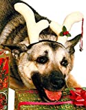 Christmas Rudolf Costume Reindeer Antlers For Pet Dog, My Pet Supplies