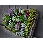 30-Gorgeous-Artificial-Succulent-Plants-Curated-by-Designers-for-Cohesive-Colors-Most-Realistic-Fake-Succulent-Plants-Available-5-Bonus-Mini-Filler-Accent-Pieces-Included-Largest-Set-of-Succulents