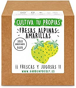 Garden Pocket - Kit Cultivo Fresas Amarillas: Amazon.es: Jardín