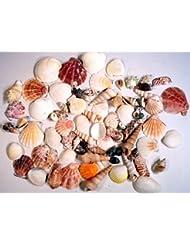 Creative Hobbies Sea Shells Mixed Beach Seashells - Various S...