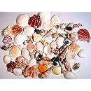 "Creative Hobbies Sea Shells Mixed Beach Seashells - Various Sizes up to 2"" Shells -Bag of Approx. 50 Seashells"