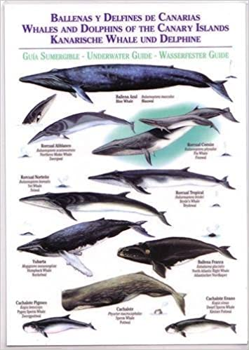 Whales and Dolphins of the Canary Islands (waterproof Field