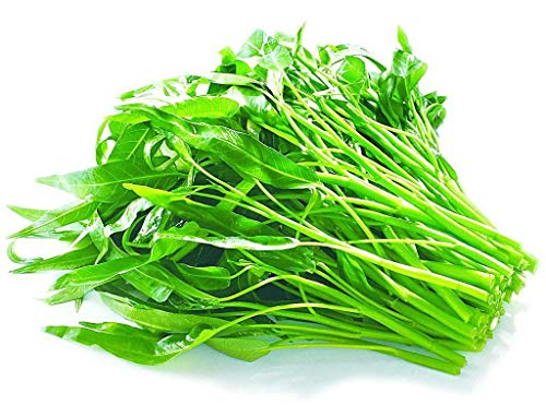 Aquatica Green Organic Vegetable Seeds 30G-Water Spinach Chinese Organic Seeds for Planting