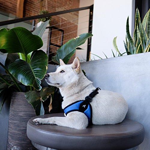 Gooby Escape-Free Dog Harness