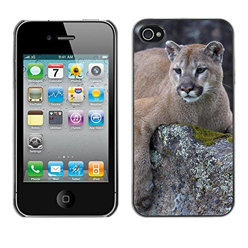 Premio Sottile Slim Cassa Custodia Case Cover Shell // V00002210 Lion de montagne // Apple iPhone 4 4S 4G