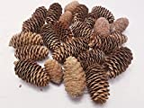 BCD Medium Pinecones - Bag Of 20-25 Medium Pinecones, Perfect For Crafting, Decorating Bowl Fillers