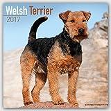 Welsh Terrier Calendar 2017 - Dog Breed Calendars - 2016 - 2017 wall calendars - 16 Month by Avonside