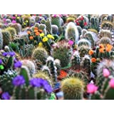 50 FINEST MIXED CACTUS Flower Seeds Garden, Lawn, Supply, Maintenance by Seedville