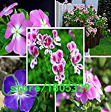 Clear : Sale! 100 Periwinkle Seeds, Mix Color Vinca (Catharanthus Roseus), A Perfect Bank Cover Behind Your House, Evergr