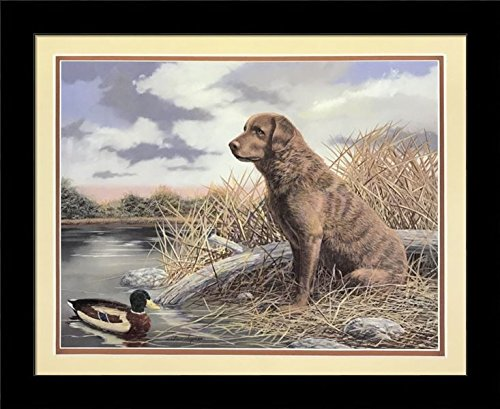 Black 1 inch Framed Chesapeake Bay Retriever, (Dog/Animal / 40-8X10-K) 8x10 inch Andrew Chapman, Art Print & Poster