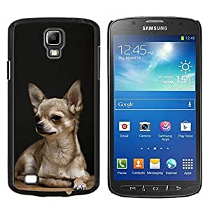 GIFT CHOICE / Teléfono Estuche protector Duro Cáscara Funda Cubierta Caso / Hard Case for Samsung Galaxy S4 Active i9295 // Chihuahua Tiny Pet Dog Canine Purse //