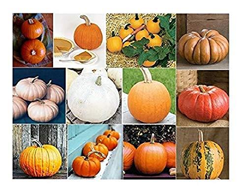 (David's Garden Seeds Collection Set Pumpkin QP9655 (Multi) 12 Varieties 200 Seeds (Non-GMO, Heirloom, Open Pollinated, Organic) )