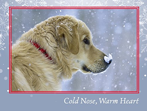 Bear's Cold Nose Christmas Cards