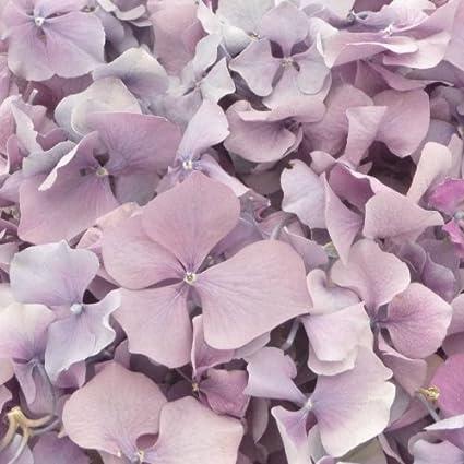 Confeti De Pétalos De Flores Lilas De Hortensia Liofilizada Amazon