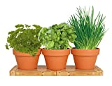 Healthy Kitchen Herb Trio Kit | Easy to Grow Basil, Parsley and Chives Seeds In Your Own Kitchen |...