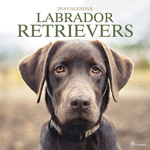 2018 Labrador Retriever Wall Calendar (Retriever Wall)