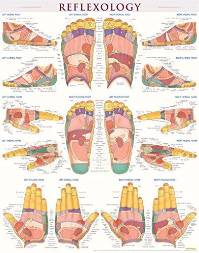 Foot Reflexology Chart - 7
