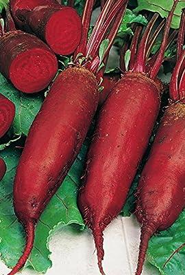 20 g Beetroot Seeds Cylinder Heirloom Vegetable Beet Seeds