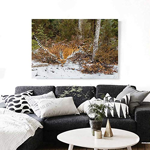 - Safari Canvas Print Wall Art Bengal Tiger in Snowy Jungle Hunting and Cruising for Prey Furry Majestic Mammal Artwork for Wall Decor 20