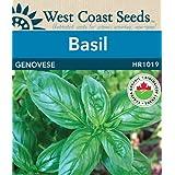 Basil Seeds - Genovese Organic
