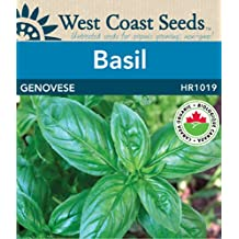 Basil Seeds - Genovese Organic Certified (approx. 375 seeds)