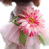 Pocciol Pet Clothes, Dog Daisy Gauze Tutu Dress Skirt Pet Dog Cat Happy Princess Clothes Bowknot Dress Pink (M, Happy Pink)