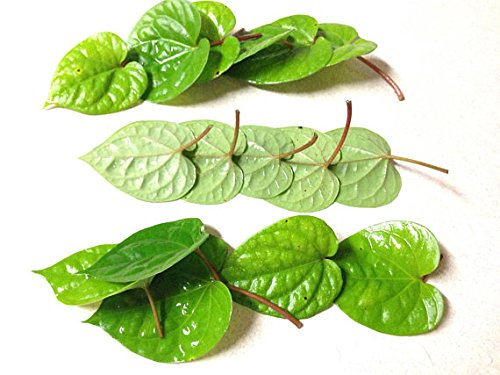 (20 Fresh LEAVES of Chewing Betel Leaf, Piper Betle- la Trau - for chewing with betel areca nut.)
