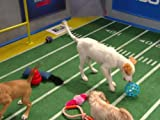 Puppy Bowl X