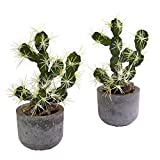 Nearly Natural 4563-S2 Cactus Potted (Set of 2)