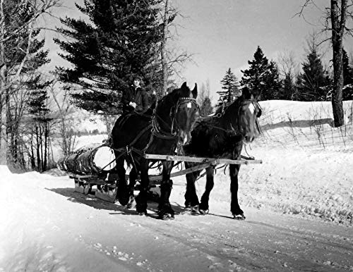 Drawn Sled - Cats Paw Prints 1939 Horse-Drawn Sled Hauling Logs, Vermont Vintage Old Photo 8.5