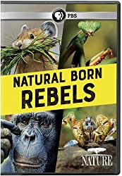 Nature: Natural Born Rebels Dvd