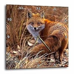 3dRose dpp_88875_1 Colorado, Jefferson County. Red Fox-Us06 Bja0261-Jaynes Gallery-Wall Clock, 10 by 10-Inch