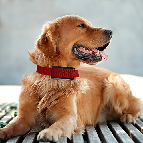 TBI New bark collar