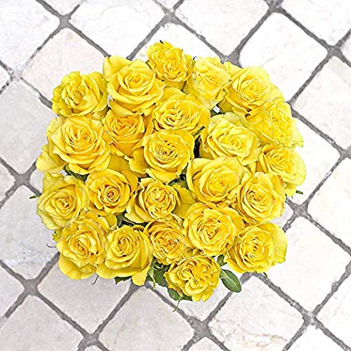 Green Choice Flowers - 24 (2 Dozen) Premium Yellow Fresh Roses with 20 inch Long Stem Farm Fresh Flowers Beautiful Yellow Rose Flower Cut Per Order Direct from Farm Fast Free Delivery Long Lasting by Greenchoiceflowers (Image #3)