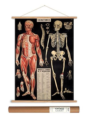 - Cavallini Papers Vintage Style Decorative Poster & Hanger Kit 20 x 28, 20