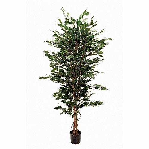 人工観葉植物 ファイカスエキゾチカM 高さ180cm fg12416 B0723D7TMK