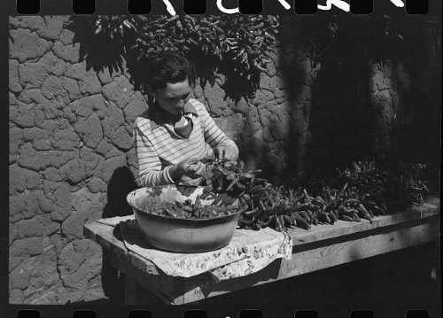 Stringing Chili Peppers (Photo: Spanish boy stringing chili peppers for drying,Concho,Arizona)
