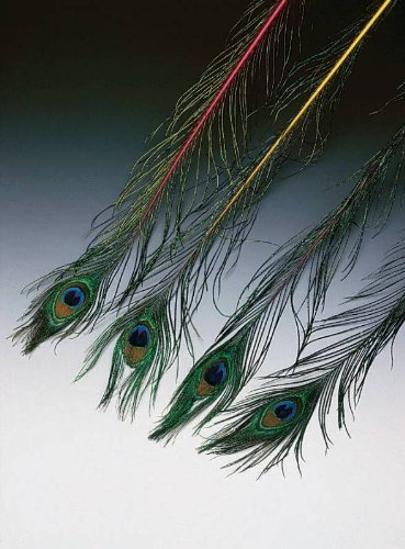 Peacock Juggling Feathers (12-Pack)