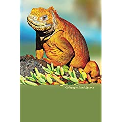 Galapagos Land Iguana: Blank Lined Notebook, Journal or Diary